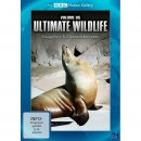 89110160 DVD ULTIMATE V5  WILDLIFE MEERESLEBEWESEN